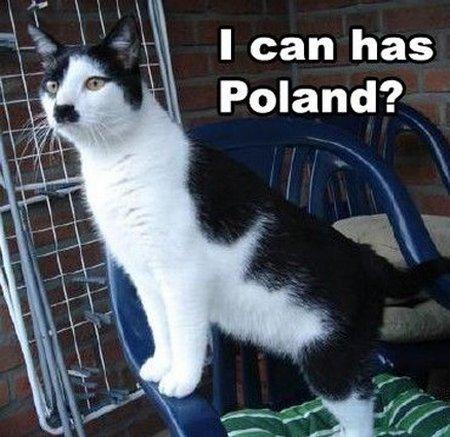 cat-meme-1