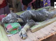 Creepy Creature Found In Thailand Has Crocodile Head and Buffalo Legs