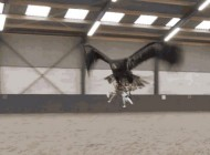 Watch This Badass Eagle Take Down an Illegal Drone